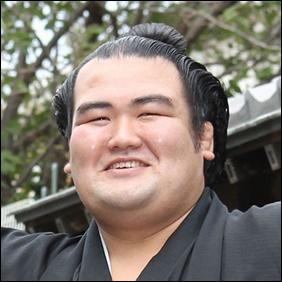 琴将菊 大相撲